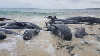 Slechts 6 van de 150 walvissen overleven stranding in Australische baai