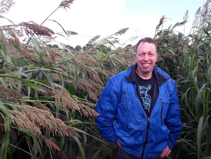 Geert Hol in het veld met sorghum.