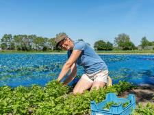 De kruiden van kwekerij Zuidbos geven smaak aan gerechten