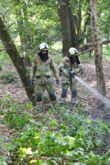 Brandweer blust bosbrand in Den Dolder