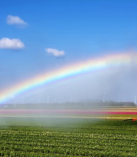 De tulpenpracht in Flevoland is puur genieten, bekijk hier de foto's