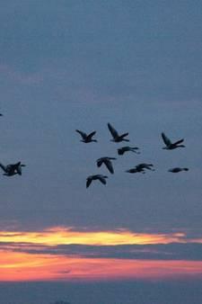 Zwin Natuur Park trekt minder bezoekers dan gehoopt