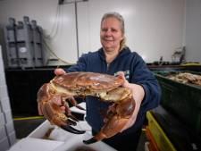 Urker krabbenhandel breidt uit; nieuwe bakken, nog meer krabben