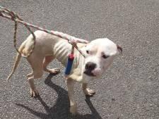 Getouwtrek om 3 verwaarloosde honden in Oldebroek: 'Het waren skeletten. Vel over been'