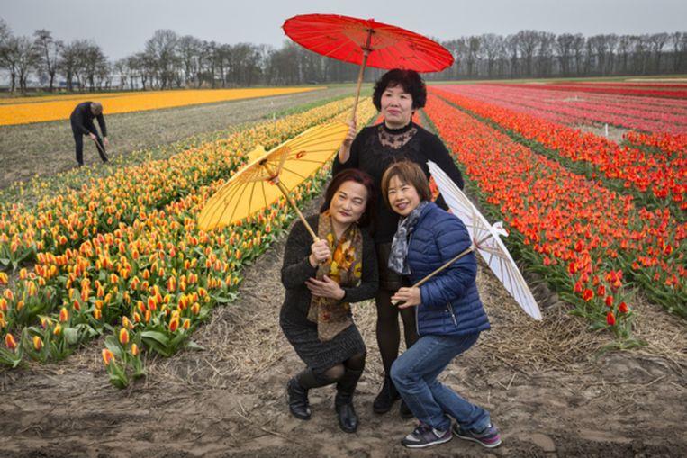 De Bollenstreek wordt jaarlijks letterlijk overlopen door toeristen. Om te voorkomen dat bezoekers de bloemen en bollen beschadigen, worden dit jaar op diverse plekken borden geplaatst die vragen om voorzichtigheid. Beeld Arie Kievit