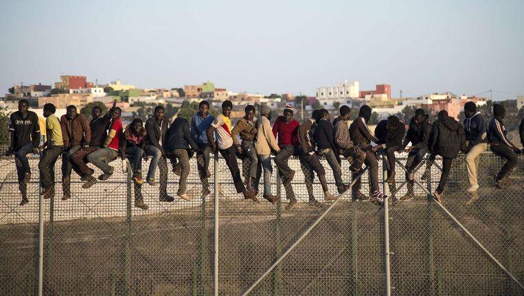 Afrikaans migranten zitten op een hek op de grens tussen Marokko en Spaans territorium. Beeld afp