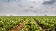 """""""Uitspraak EU-Hof van Justitie zet duurzame landbouw in Europa op helling"""""""
