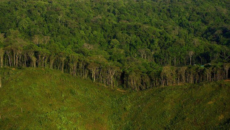 Regenwoud in het noordoosten van Panama City.