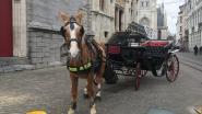 Toch nog paarden in de stad na 1 januari (maar niet meer permanent)