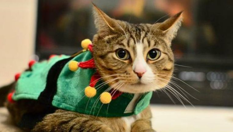 Hopelijk kan Camo snel zijn kerstpakje weer aantrekken