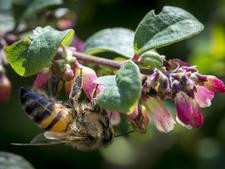 Tuinmannen Nico en Lodewijk komen in actie voor insecten