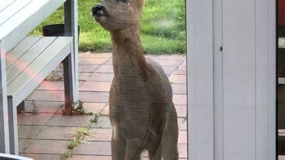 En plots staat Bambi aan de achterdeur