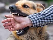 Victime d'une agression, il est sauvé par son chien