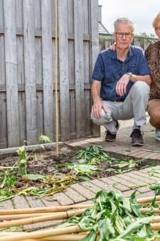Politie haalt wietplanten Jan en Jannie uit Hasselt weg: 'Ze doen iets dat niet mag'