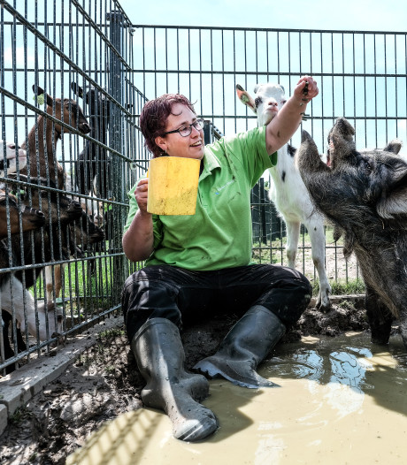 Hitte in de Liemers: toetsen in de schaduw, kinderboerderij dicht en honden blijven binnen