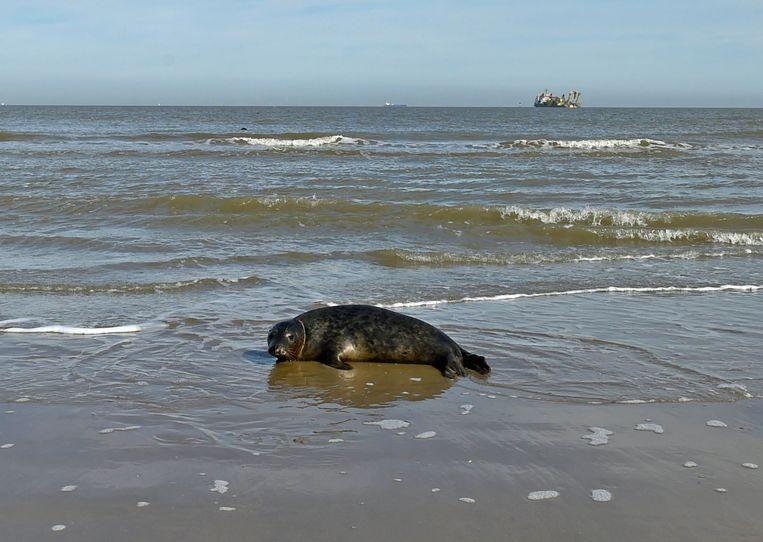 Vier zeehondjes spoelden de afgelopen dagen aan.