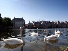 Nog amper meldingen over zwanenstropers in Den Haag