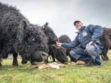 Doordeweeks is Jeroen van de Lindeloof makelaar, in het weekend koeienboer