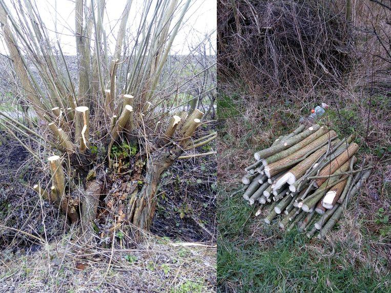 OPWIJK: De wilg met het stapeltje hout