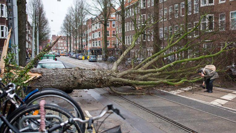 Een omgevallen boom in Amsterdam. Beeld ap
