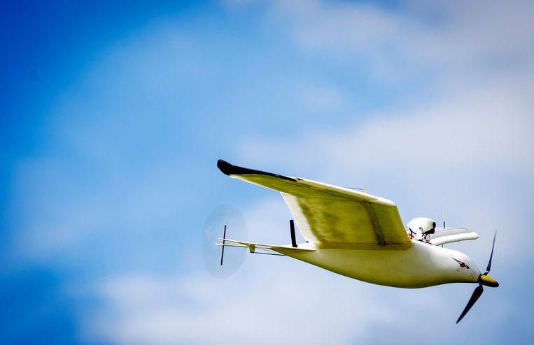 In Haaksbergen wordt door Staatsbosbeheer een robotmeeuw ingezet bij de jaarlijkse telling van de grauwe gans. Beeld ANP