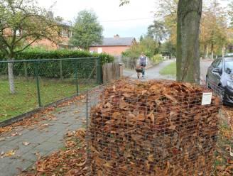 """Halle plaatst opnieuw bladkorven: """"Herfstbladeren zorgen voor mooi maar gevaarlijk tapijt"""""""