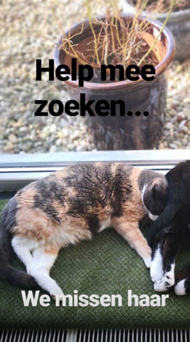 Vermiste kat van Bil Barberis gered door brandweer.