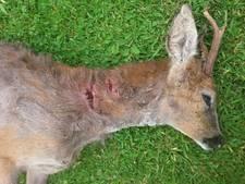 Utrechtse boswachters zijn het zat: hoge boete voor loslopende hond