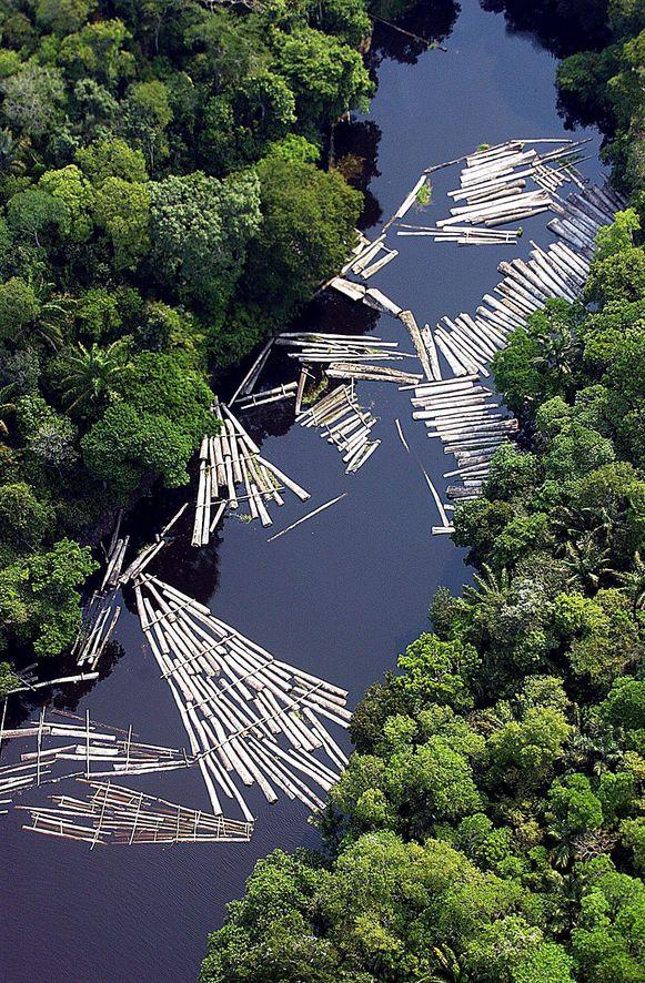 De resultaten van illegale houtkap.