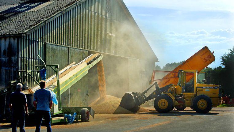 Het geoogste graan van een akkerbouwer in Flevoland wordt gestort in de opslag. Beeld ANP