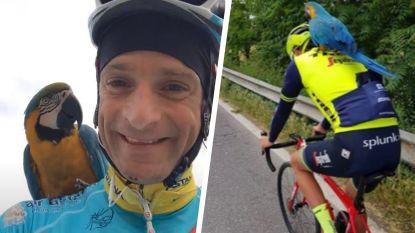 Franky, de trouwe metgezel van de betreurde Michele Scarponi, heeft een nieuw maatje