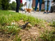 Hattemers ruimen poep van hun honden beter op