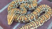 Dieven stelen volle plunjezak: helaas zitten er slangen in