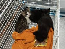 Jonge kittens gedumpt op industrieterrein in Bunschoten