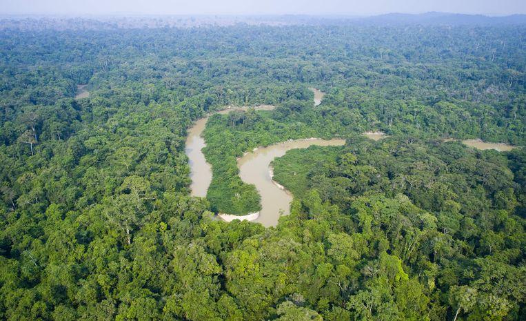 Deel van het Amazonewoud in Brazilië. Beeld AFP