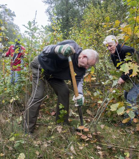 Zandstuvebos bij Den Ham in goede staat dankzij vrijwilligers