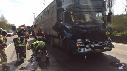 Al uur aanschuiven op E313 richting Antwerpen na ongeval met vrachtwagens: twee gewonden naar ziekenhuis
