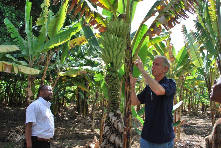 Rony Swennen reist de wereld rond op zoek naar bananen. Van de 2.000 bestaande soorten heeft hij er 1.500 in z'n bezit.
