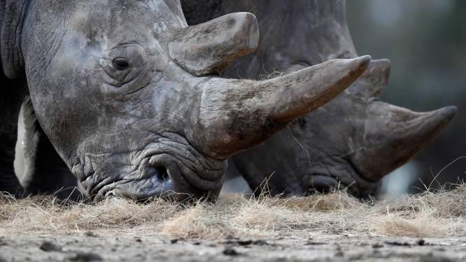 Meisje (2) valt in neushoornverblijf tijdens bezoek aan dierentuin in Florida