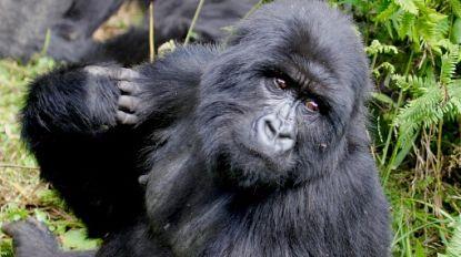 """""""China wil bedreigde diersoorten uit Afrika importeren voor dierentuinen"""""""