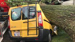 Enorme boom valt op twee auto's en huis: rukwind wordt bewoners bijna fataal