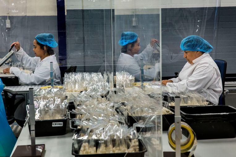 Bij Promen, een voormalige sociale werkplaats in Gouda, worden woensdag marshmallows ingepakt.  Beeld Arie Kievit