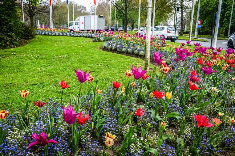 De Unescorotonde is vaak hét voorbeeld van kleur tijdens de lente in Brugge.