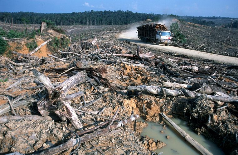 Ontbossing in Indonesië. Beeld epa