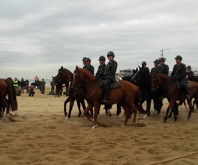 De paarden tijdens de test.