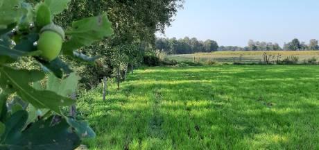 En dat is drie: nog een zonnepark aan westrand van Rijssen