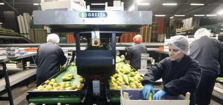 Coronabesmetting bij twee fruitbedrijven Betuwe
