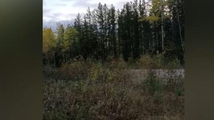Ce mystérieux cri entendu dans une forêt canadienne intrigue les réseaux sociaux