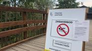 Opnieuw blauwalgen in De Plas: verboden in het water te gaan