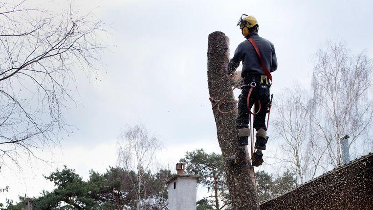 Grzegorz haalt een boom neer in de buurt van Warschau Beeld Piotr Malecki